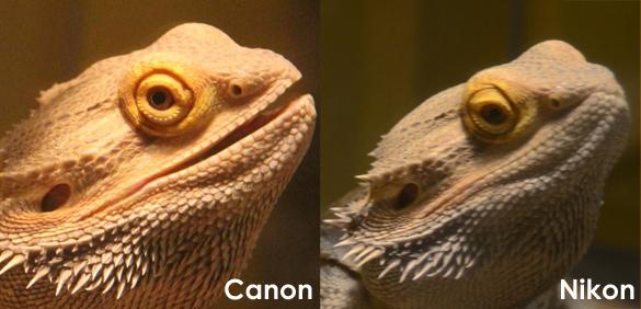 Canon 60D or Nikon D7000: A Filmmaker's Decision Part 3