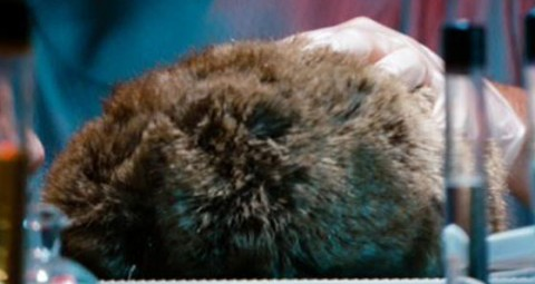 The real trouble with tribbles is, without them, there's no way we can finish this movie on a lame high note.